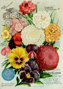 seeds_catalogs-01046 - 070-Carnations, bouquet, phlox, Sweet Pea, Pansies, Aster [2429x3419]