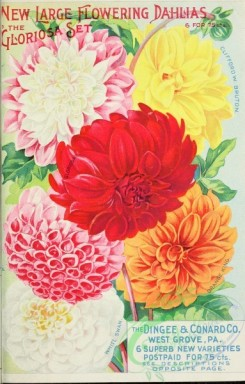 seeds_catalogs-01412 - 061-Dahlia [2975x4653]