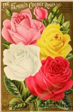 seeds_catalogs-01551 - 006-Rose [2866x4389]