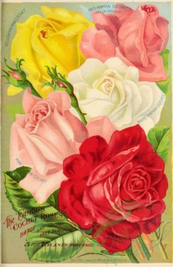 seeds_catalogs-01600 - 030-Roses [2900x4459]