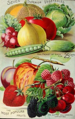 seeds_catalogs-01755 - 026-Harvest, Berries, Raspberry, Cherry, Blackberry, Apple, Strawberry, Plum, Onion, Tomato, fruits, vegetables, Radish, Cabbage, Cucumber, Musk Melon [3152x4989]