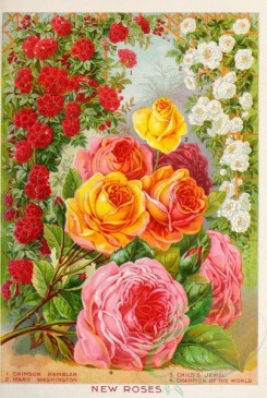 seeds_catalogs-02064 - 081-Roses [2283x3399]