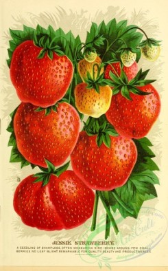 seeds_catalogs-02804 - 007-Strawberry [1952x3139]