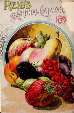 seeds_catalogs-03021 - 038-Fruits, Round frame, Apple, Red currant, Pear, Raspberry, gosseberry, berries [2299x3488]