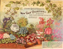 seeds_catalogs-03111 - 029-Flowers in vases, greenhouse [4318x3336]