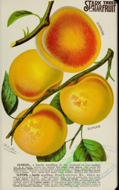 seeds_catalogs-03295 - 023-apricot [2692x4287]
