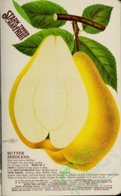 seeds_catalogs-03305 - 033-Pear [2667x4321]