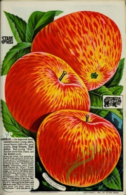 seeds_catalogs-03676 - 016-Apple [2878x4463]