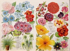 seeds_catalogs-03744 - 084-Flowers, Vase, Nasturtium, Sweet Pea, Aster, Dianthus, Rose [4241x3136]