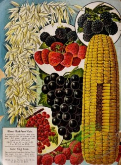 seeds_catalogs-03757 - 002-Corn, Grapes, Oats, Strawberry, Raspberry [3173x4325]