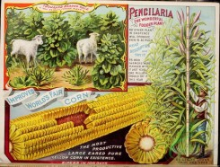 seeds_catalogs-03775 - 021-Sheep, Corn, plant [4295x3262]