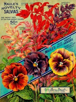 seeds_catalogs-03821 - 067-Pansies, Frame, Salvia [3995x5350]