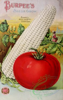 seeds_catalogs-03870 - 020-Tomato, Corn [3034x4755]