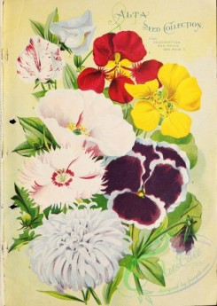 seeds_catalogs-03924 - 074-Nasturtium, Sweet Pea , Aster, Pansies [2898x4075]