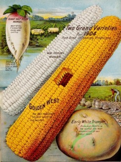seeds_catalogs-04020 - 091-Corn, Potato, Harvesting, Radish [3259x4363]