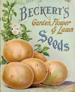 seeds_catalogs-04485 - 091-Potato, plant [3355x4116]