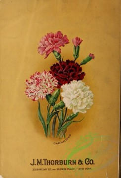 seeds_catalogs-04838 - 063-Carnation [3322x4896]