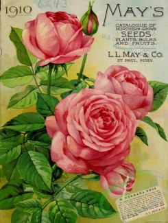 seeds_catalogs-04941 - 074-Rose [3285x4360]