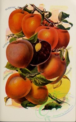seeds_catalogs-05090 - 035-Plum [2649x4235]