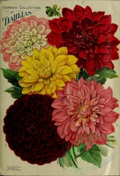 seeds_catalogs-05894 - 073-Dahlia [3145x4602]
