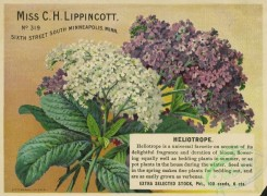 seeds_catalogs-06003 - 087-Heliotrope [1850x1361]