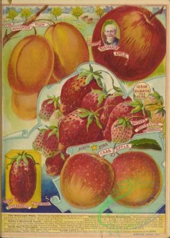 seeds_catalogs-06194 - 083-Plum, Apple, Strawberry, Crab Apple [4530x6310]