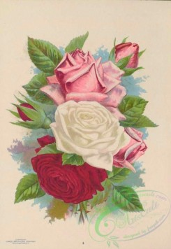 seeds_catalogs-06252 - 035-Roses, 002 [4066x5903]