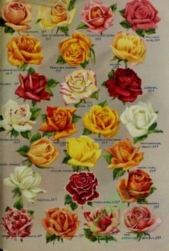 seeds_catalogs-06429 - 111-Roses, 2 [3251x4828]