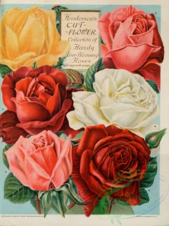 seeds_catalogs-07948 - 003-Roses