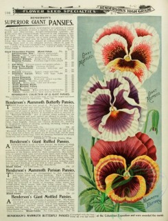 seeds_catalogs-07975 - 005-Pansy