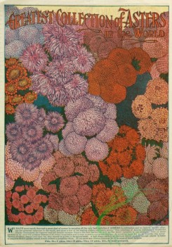 seeds_catalogs-08137 - 005-Asters