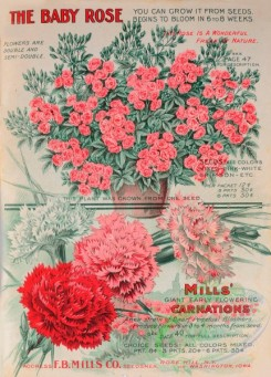 seeds_catalogs-08179 - 009-Carnation, Roses