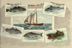 sharks-00117 - CODFISH, MACKEREL, HADDOCK, HERRING, SHARK
