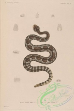snakes-00234 - 004