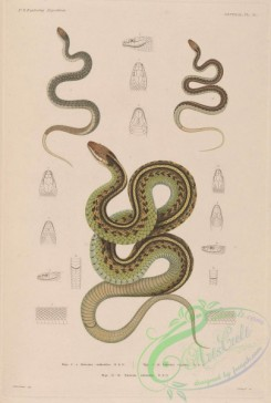 snakes-00236 - 008