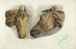 sporting-00038 - 042-Two horse heads
