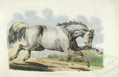 sporting-00039 - 043-White horse running