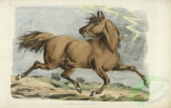 sporting-00040 - 044-Brown horse running
