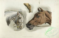 sporting-00041 - 045-Heads of a white and a brown horses