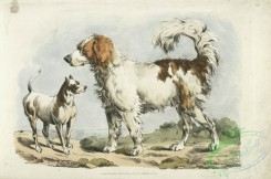 sporting-00046 - 050-Two hunting dogs
