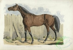 sporting-00050 - 054-Dark-brown horse