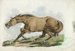 sporting-00051 - 055-Light-brown horse