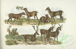 sporting-00058 - 062-Hinds, Stags or Red Deer