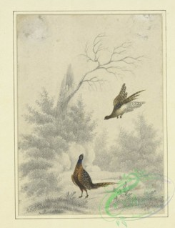 sporting-00060 - 072-Sketch of pheasant, one flying and the other on the ground,
