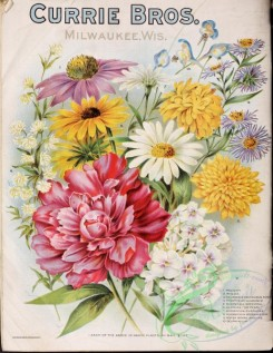 sunflower-00056 - 067-Flowers bouquet, paeony, phlox, helianthus, sunflower, pyrethrum, rudbeckia, achillea, aster, delphinium