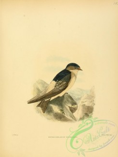 swallows_and_swifts-00114 - Tree Martin