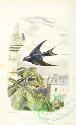 swallows_and_swifts-00265 - Swallow