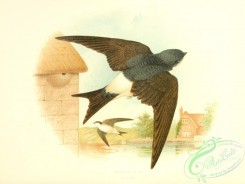 swallows_and_swifts-00354 - Martin