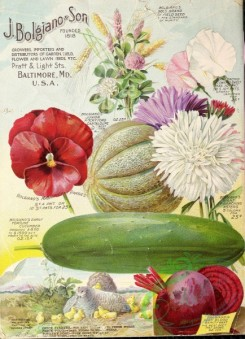 sweet_pea-00015 - 133489 - 030-Cantaloupe, Pansies, Cucumber, Sweet Pea, Chickens with nestlings, Aster