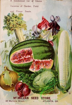 sweet_pea-00227 - 174751 - 087-Vegetables, fruits, Sweet Pea, Corn, Cabbage, Onion, Beet, Celery